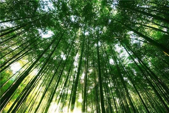 竹林深处・重渡沟