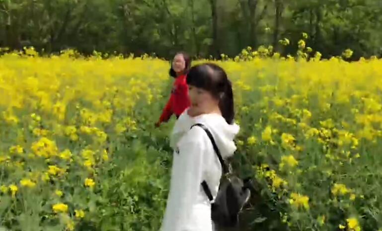 寻美汉中万亩油菜花海        汉中盆地是油菜花的故乡,油菜花的天堂。每年花开时节…