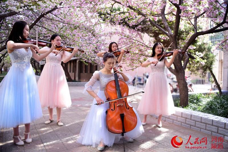 樱花树下的演奏:花美、人美、琴声美