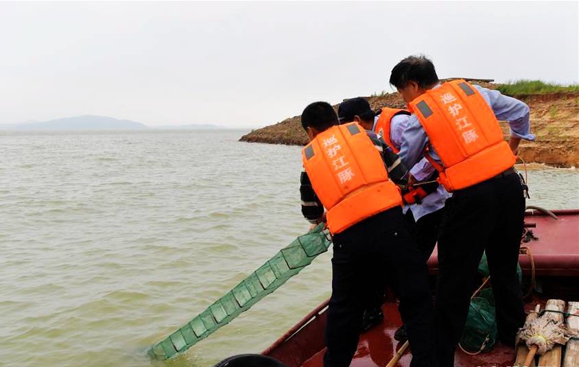 """鄱阳湖上的江豚""""保镖"""""""