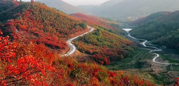 """桐柏:铺好""""扶贫路""""""""致富花""""盛开        万山红遍,层林尽染,游人如织。来自襄樊的李红带着一家老少六口,驱车到桐柏红叶景区游玩。"""