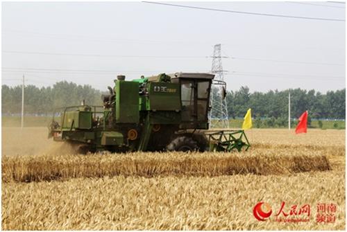 河南:如何從中原糧倉到國人廚房  中原熟天下足。河南常年種小麥8000萬畝以上,產量占全國的1/4,與小麥相關的規模以上企業1700多家。然而,一個問題始終困擾河南,怎么既保糧食穩產,又促農民增收?……【詳細】
