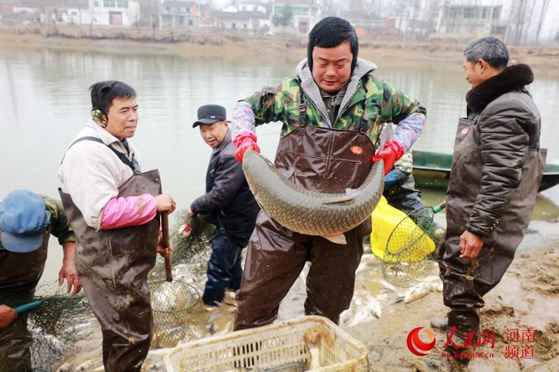 人欢鱼跃 河南光山捕鱼忙