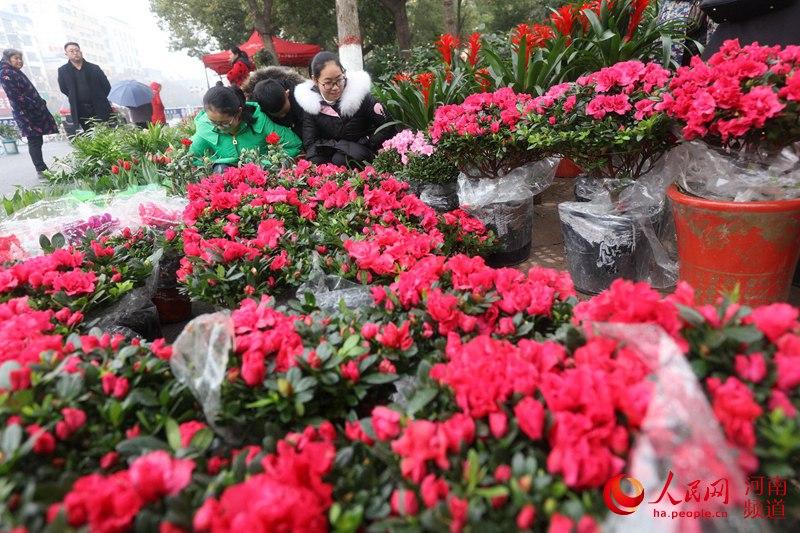 河南光山:新年到 鲜花俏
