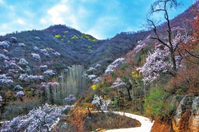 郑州赏花踏青攻略来了送您一整个春天_途迅旅游网