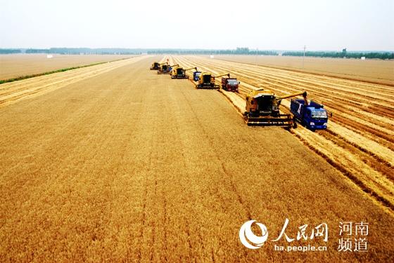 """河南西华:一个产粮大县的""""减肥""""革命  西华县10万亩小麦对比田里,麦苗尤其肥壮油绿,麦穗均匀饱满,""""减肥""""后的提质增效水到渠成。这个农业大县悄然进行着一场农业""""比武""""……【详细】"""