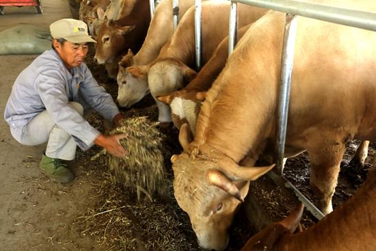 河南光山:当地32名村民养牛走上致富路
