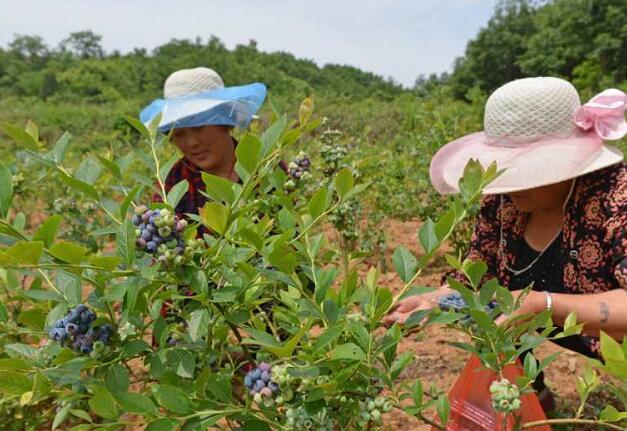 鲁山:拉长林业产业链条 让特色林业经济成脱贫增收主渠道