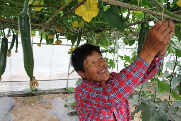 河南长葛:把幸福'种'到农民心坎儿里 带动农民创新创业致富