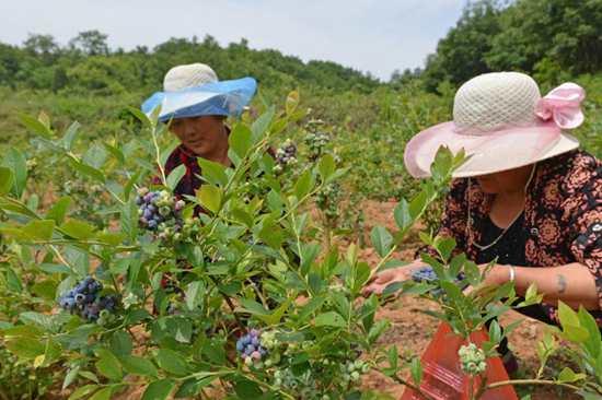 鲁山县加大林业生态扶贫力度 实现贫困户就近就业