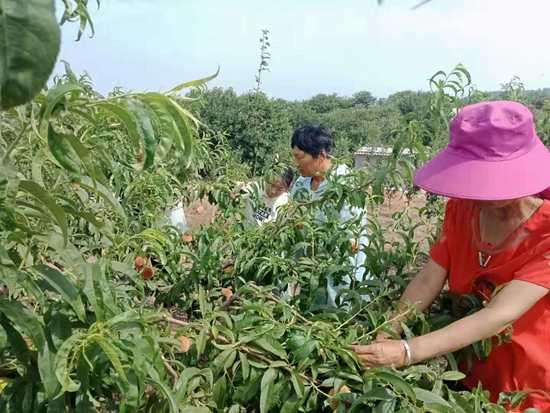鲁山县村干部发展林果业带领贫困户致富