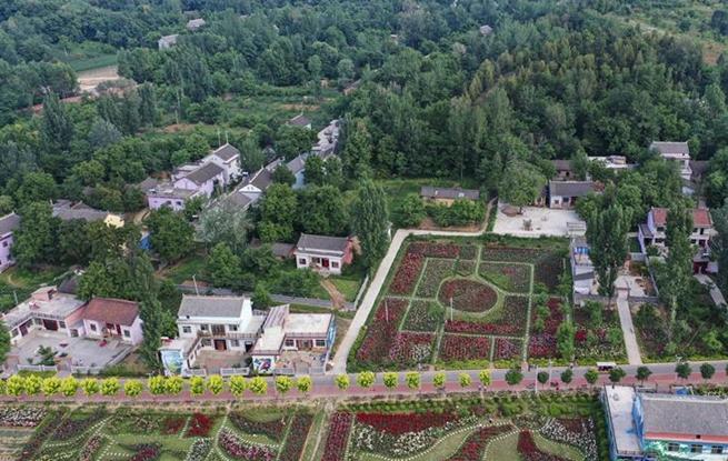 陕西洛南:铺满鲜花的玫瑰小镇