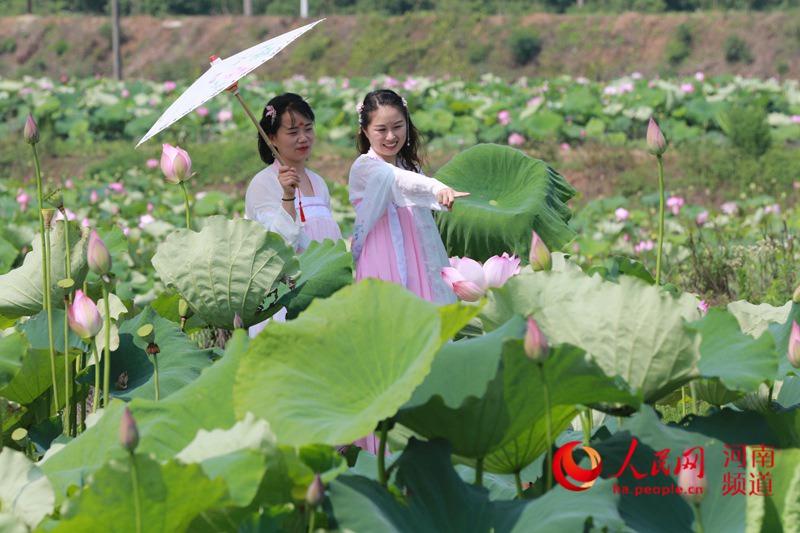 河南光山:太空荷花竞相开放引人来 促进乡村旅游大发展