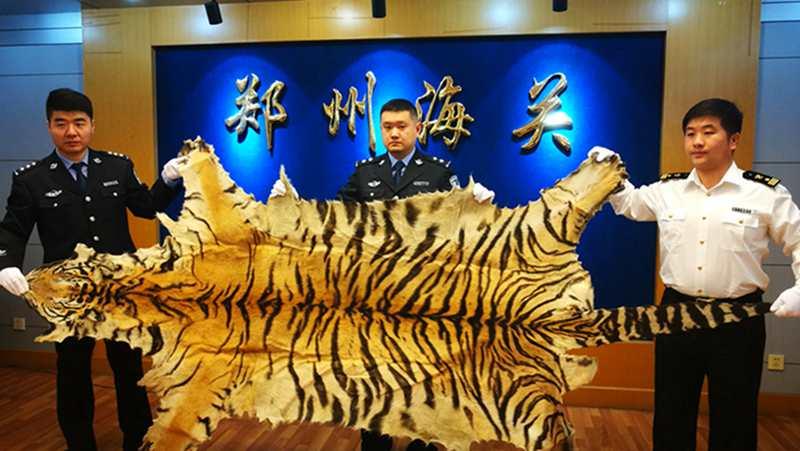 郑州海关侦办一起虎皮走私案 案值160万