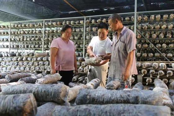 南召县马市坪乡:小香菇成山区群众脱贫致富大产业
