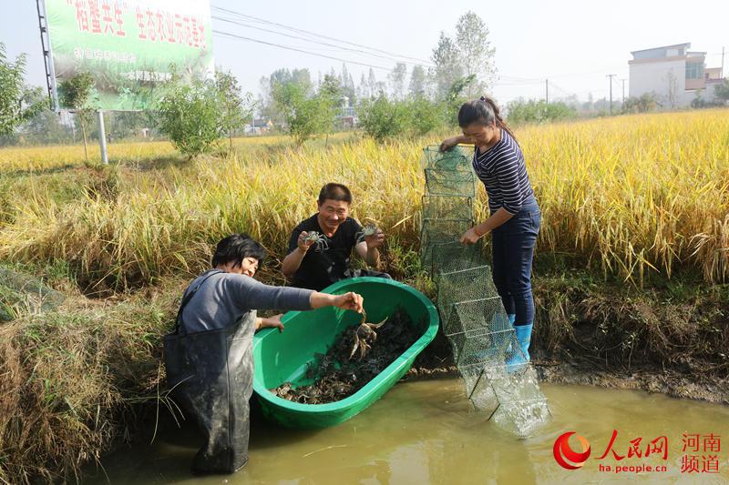 河南光山:金秋时节螃蟹喜获丰收