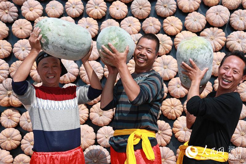河南各地喜迎2019中国农民丰收节