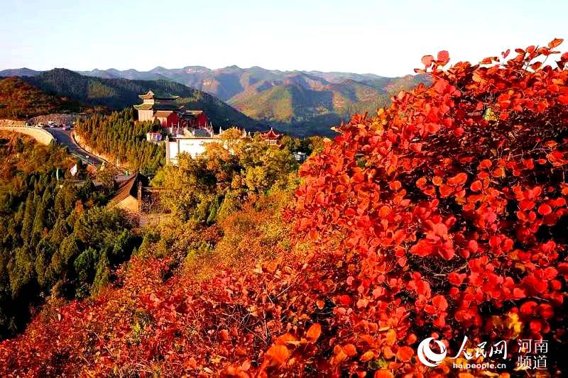 河南林州:柏尖山红叶染太行 游客慕名而来