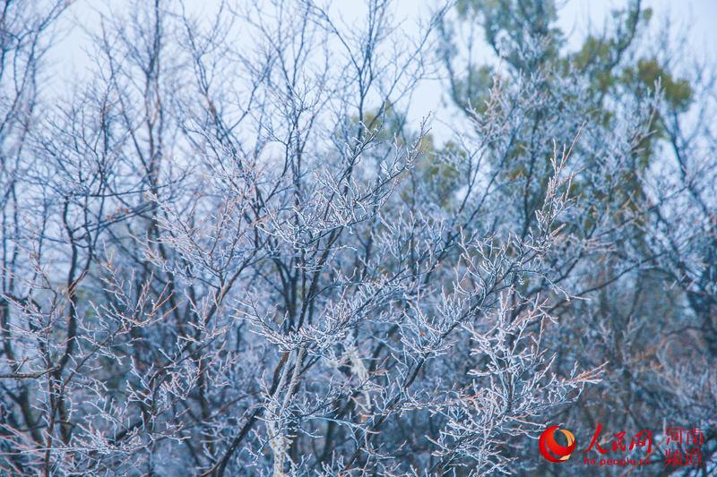 河南云台山现梦幻冰晶景观