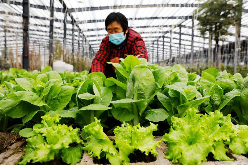 """河南宝丰:管好""""菜篮子"""" 积极供应市场"""