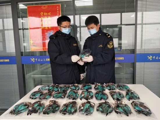 消除卫生安全隐患!郑州海关在邮递渠道查获翠鸟皮毛25张