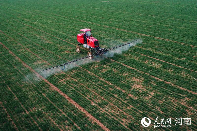 河南温县:雨水节气农事忙