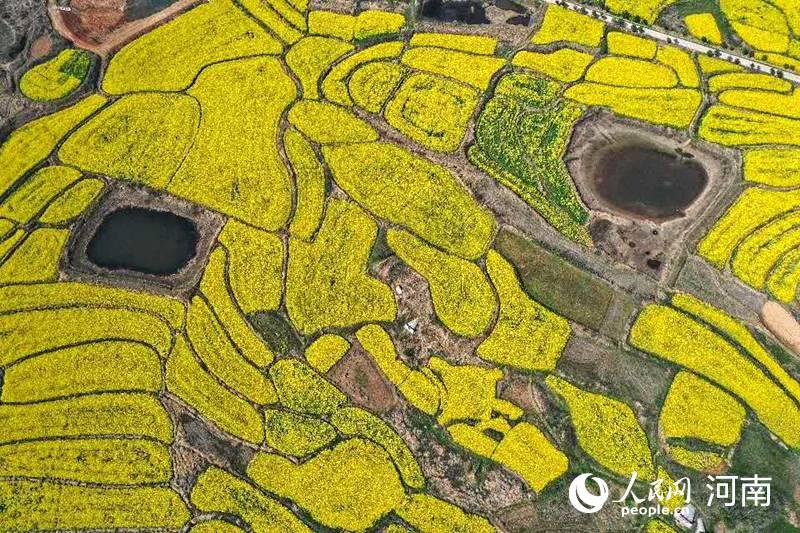 信阳打造万亩油菜基地 助力农民增收