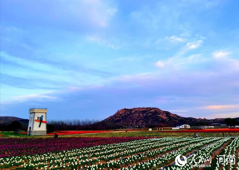驻马店嵖岈山:郁金香花开 欢声笑语