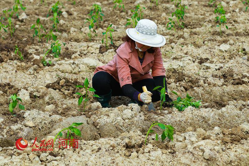 河南光山:春季种植助脱贫
