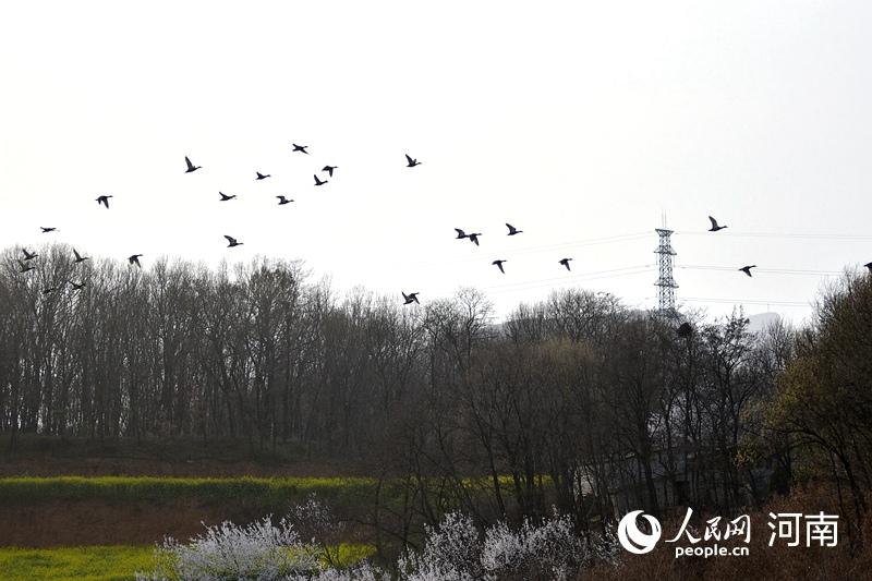 河南舞钢:游弋、戏水 众多鸟类石漫滩安家