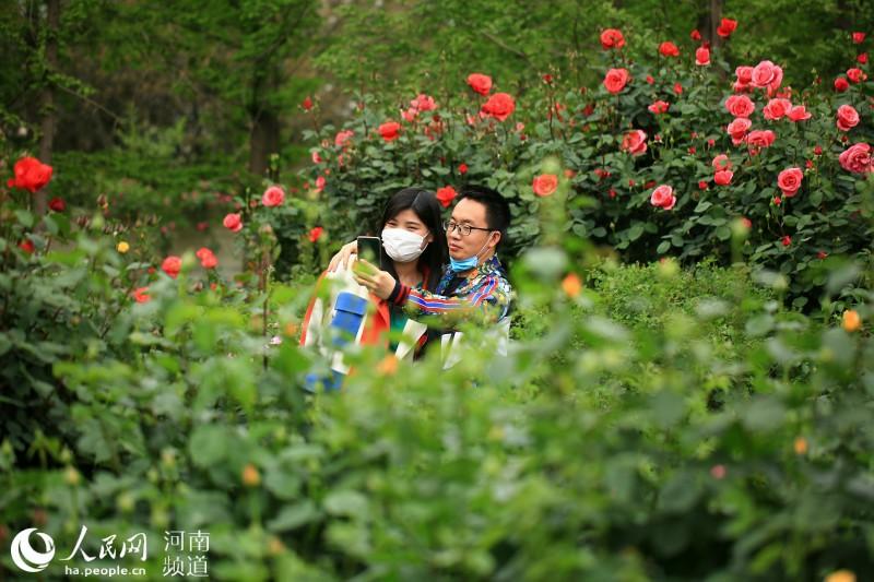 郑州月季公园繁花盛开 好一番姹紫嫣红