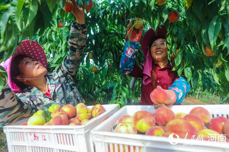 河南光山:万亩鲜桃促脱贫 户均年增收2万余元