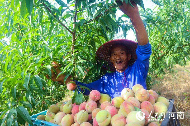 仙桃种植万余亩 带动1600户贫困群众脱贫