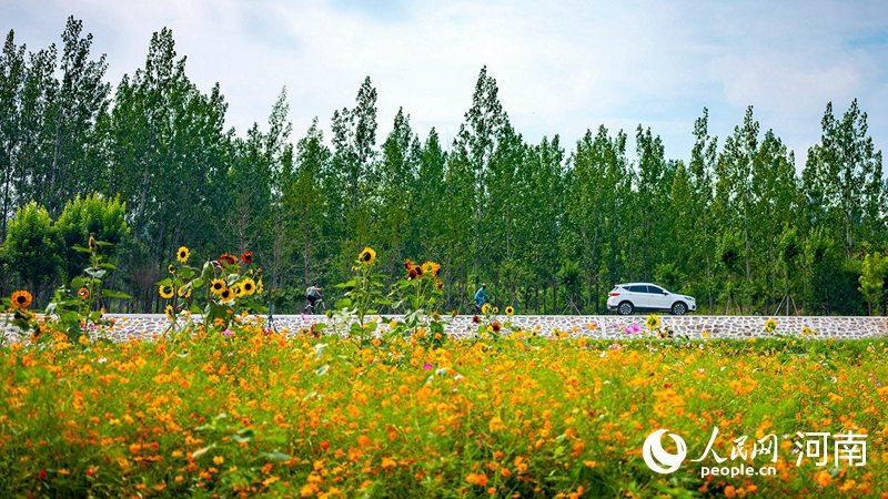 河南三门峡:打造沿黄生态治理样板