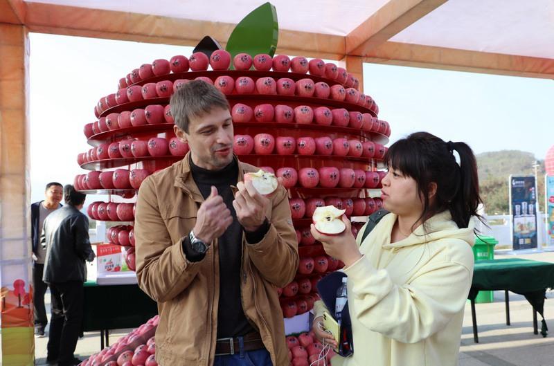豫晋陕黄河金三角苹果展销会昨日开幕 灵宝苹果进入销售季