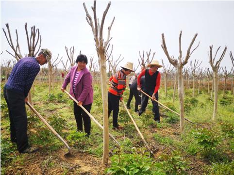 河南桐柏:产业培育出实招 脱贫致富有依靠