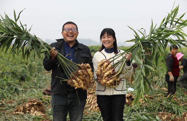 """鲁山县:小夫妻返乡创业打""""姜山"""""""