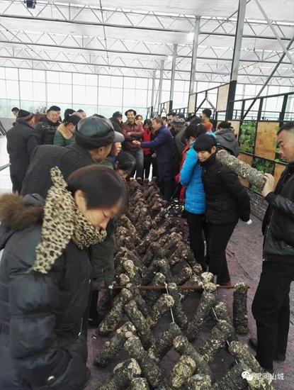 鹤壁市山城区打造食用菌全新扶贫产业
