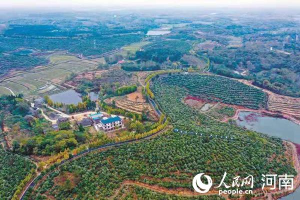 【决胜2020】河南光山:油茶园里蹚出致富路
