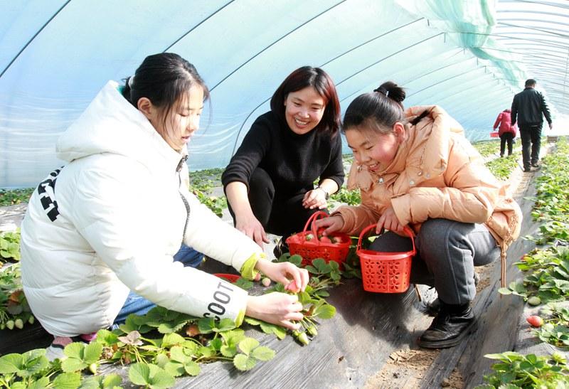 河南尉氏:发展种植大棚 带动贫困户增收