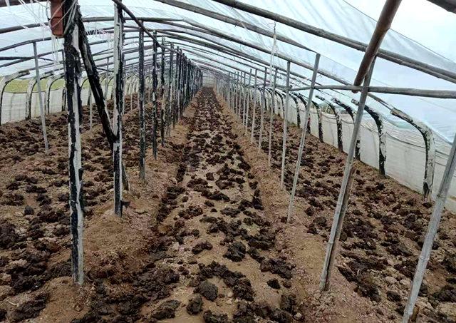 鲁山县张良镇:施有机质粪肥 产无公害蔬菜