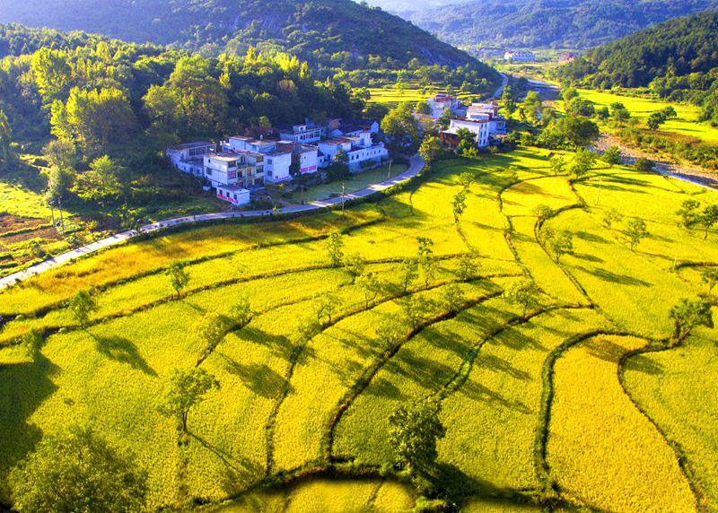 商城县:合作经济组织带动产业强农民富