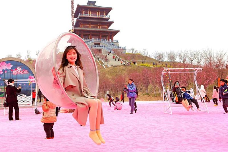 荥阳:黄河樱花节粉妆昨日开幕