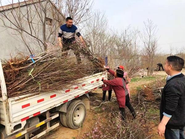 淇县:结对帮扶送树苗 助村民走上致富快车道