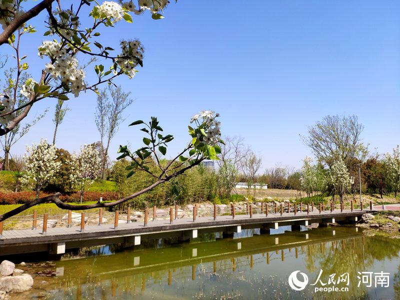 郑州:一派生机勃勃之景