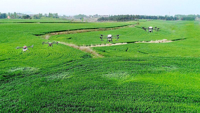 信阳商城:无人机飞防 护小麦健康