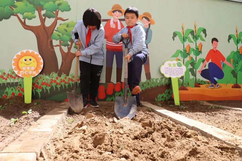 金水区文化绿城小学开展劳动教育活动 让学生在劳动中获得生活体验