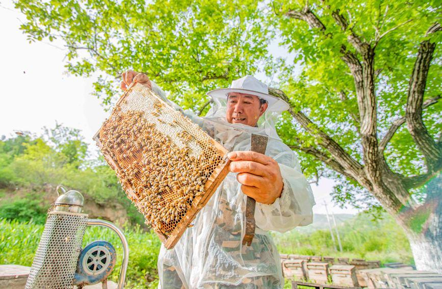 """蜂农周轩看着逐渐""""封盖""""的蜂巢,脸庞绽放出了幸福的笑颜。聂金锋摄"""