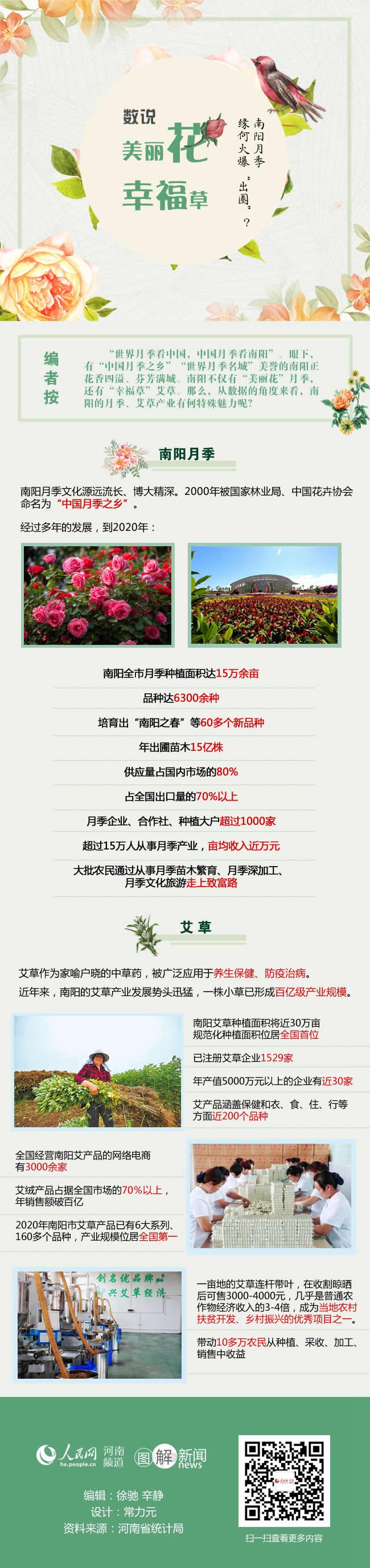 """南阳月季凭啥火爆""""出圈""""? """"数""""说""""美丽花""""""""幸福草"""""""