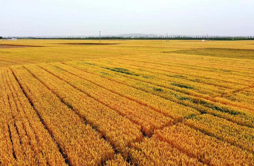 河南再建两个引黄灌溉工程 每年可增粮食5.65亿斤